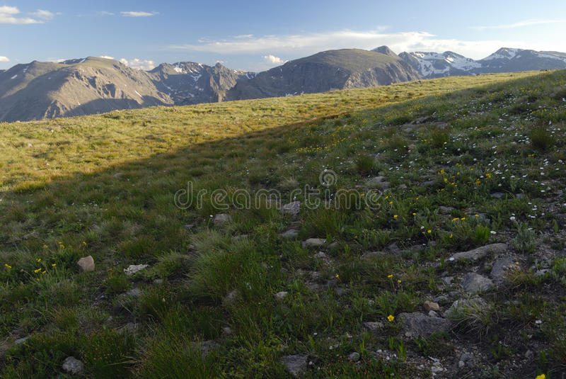 Prato alpino in montagne rocciose del Colorado immagini stock