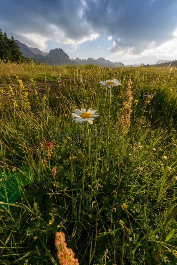 Prato con i fiori immagine stock libera da diritti
