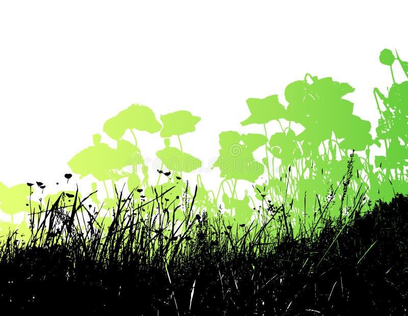 Prato con i fiori del papavero e dell'erba. illustrazione di stock