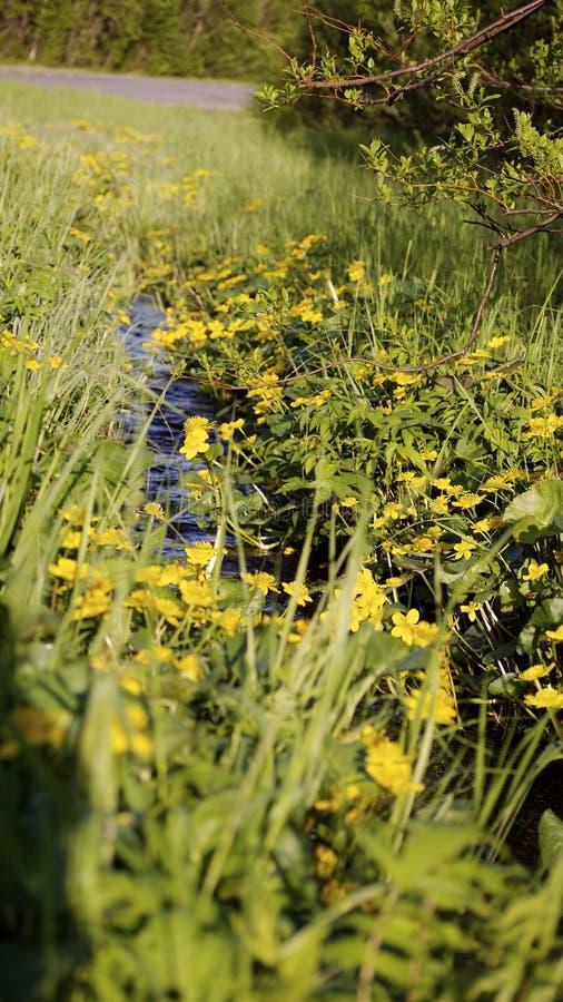 Prato con un brooklet, estate fotografie stock libere da diritti
