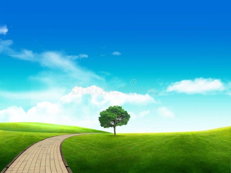 Prato con una giovane erba verde ed il blu scuro immagine stock libera da diritti