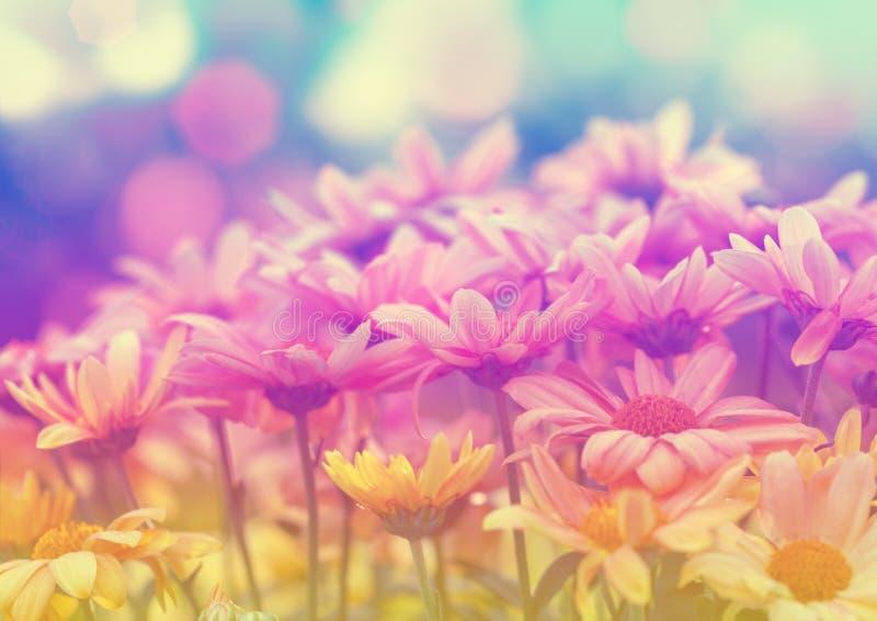 Prato d'annata del fiore fotografia stock