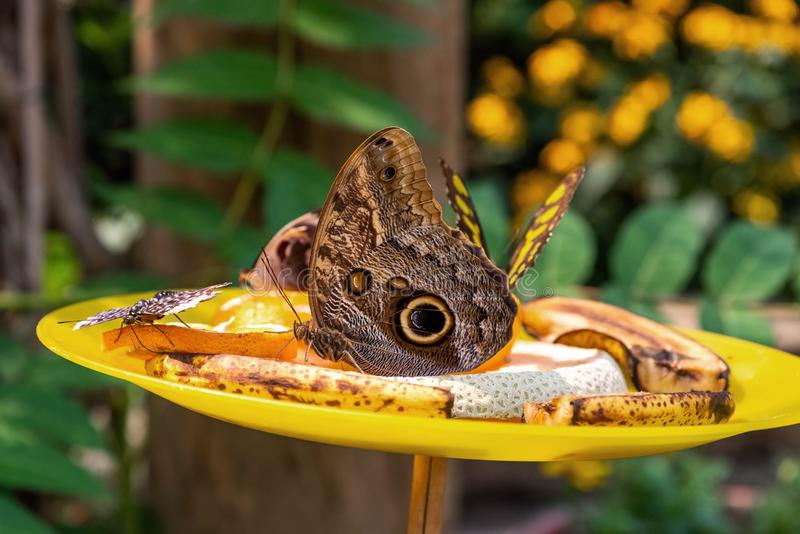 Prato de fruto da borboleta imagem de stock royalty free