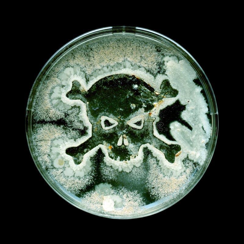 Prato de Petri com as bactérias na forma de um crânio e de ossos cruzados imagens de stock royalty free