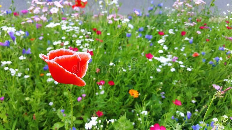 Prato del fiore di estate fotografia stock