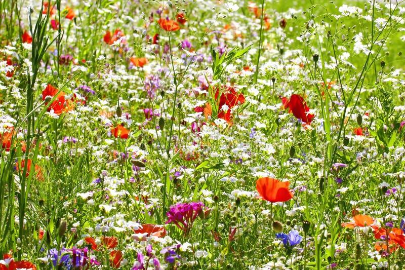 Prato del fiore di estate immagini stock