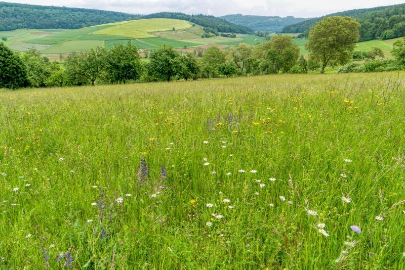 Prato del fiore lungo la traccia di escursione interurbana Neckarsteig immagine stock libera da diritti