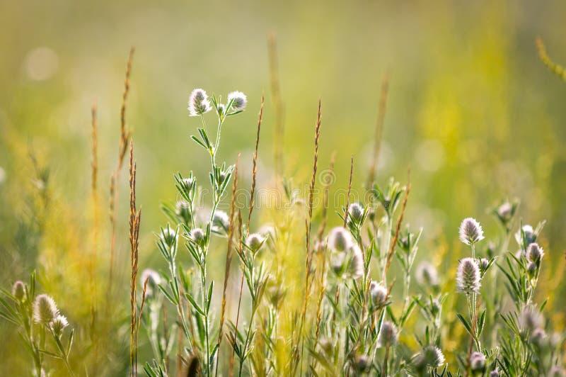 Prato del fiore selvaggio fotografie stock