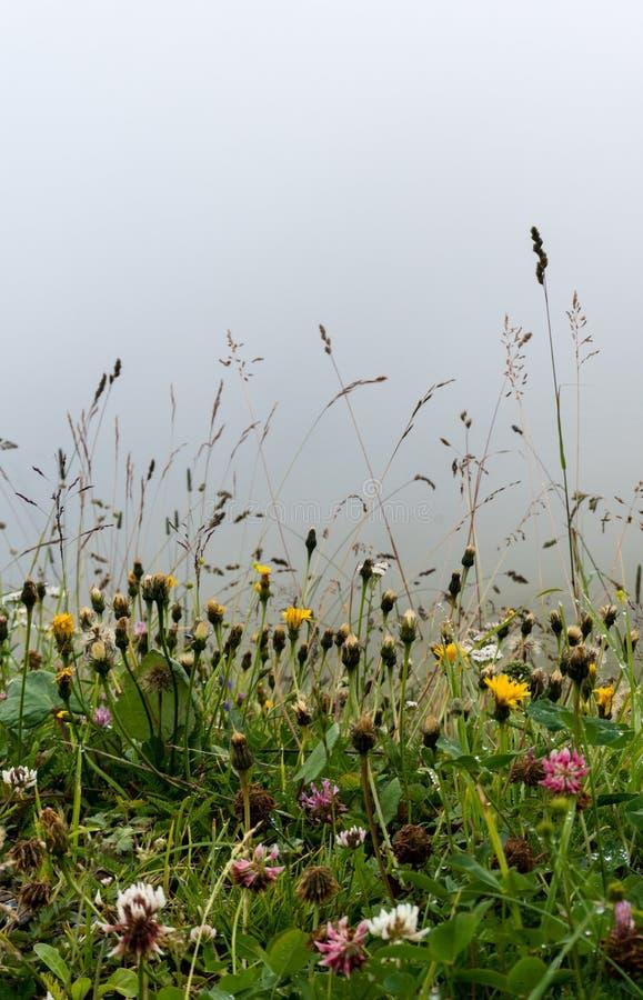 Prato del Wildflower con un fondo della nebbia immagini stock libere da diritti