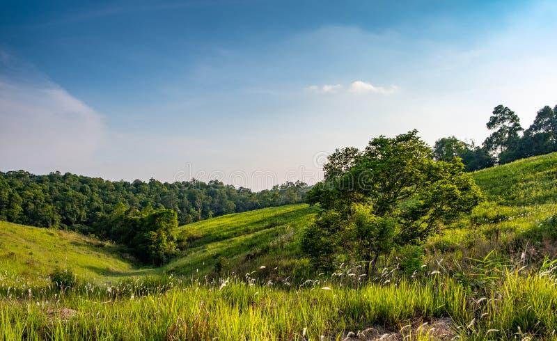 Prato della foresta nel giorno soleggiato immagine stock
