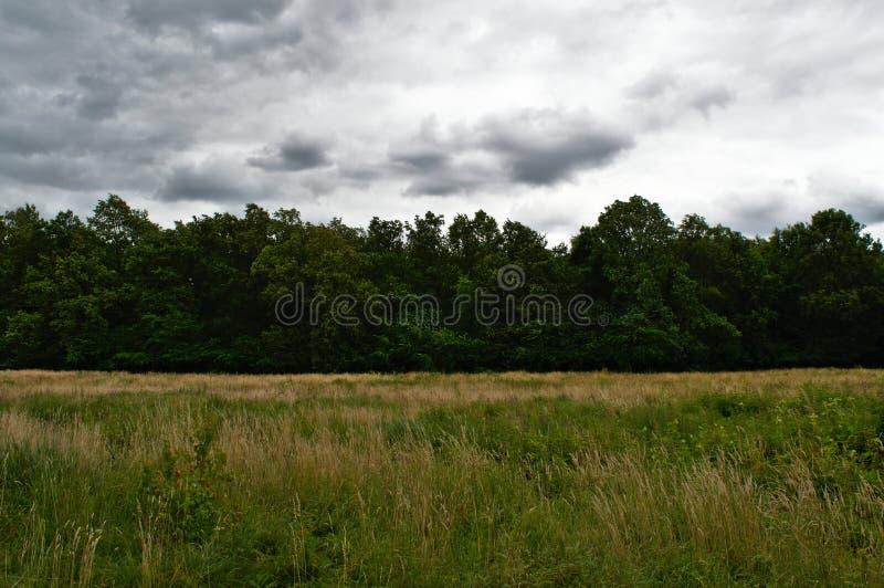 Prato della molinia a Poznan, Polonia fotografia stock libera da diritti