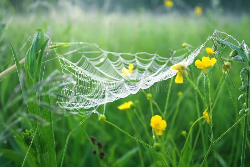 Prato della primavera con erba verde e la ragnatela bianca, backgr della sfuocatura fotografie stock libere da diritti