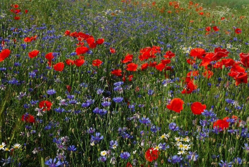 Download Prato della sorgente fotografia stock. Immagine di giardino - 3884470