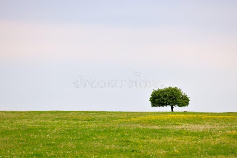 Prato della sorgente con l'albero immagini stock libere da diritti