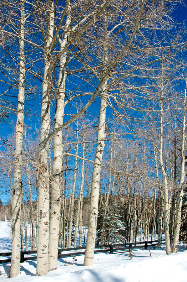 Prato dello Snowy fotografia stock