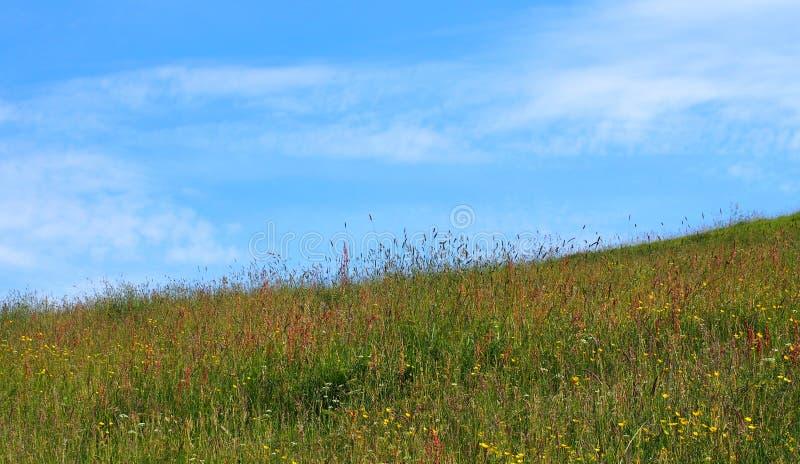 Prato di fieno luminoso di inizio dell'estate con le erbe ed i wildflowers naturali alti su una mattina soleggiata luminosa con c fotografie stock