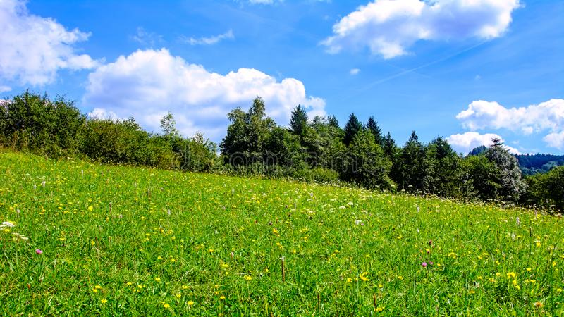 Prato di fioritura di estate immagine stock libera da diritti