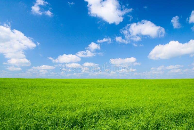 Prato e cielo blu fotografia stock