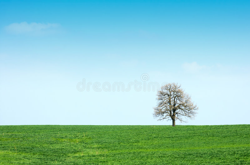 Prato ed albero verdi della sorgente fotografia stock
