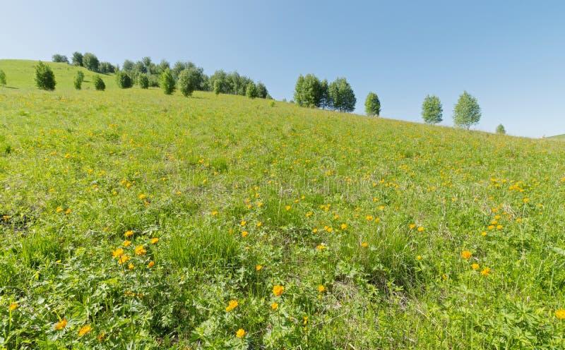 Prato erboso verde sulla collina con i bei fiori arancio luminosi immagine stock libera da diritti
