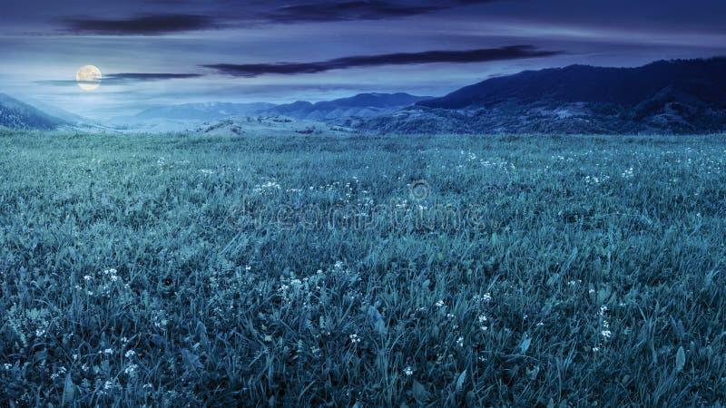Prato fresco dell'erba vicino alle montagne alla notte fotografie stock libere da diritti