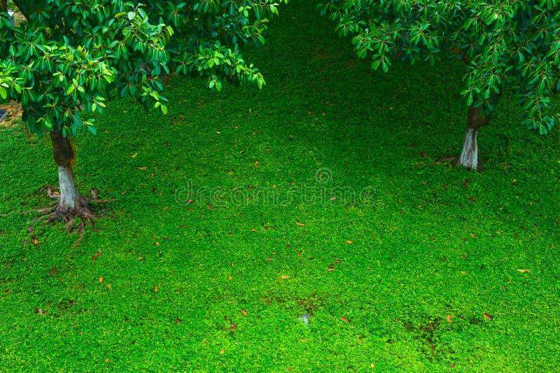 Prato inglese con l'albero fotografie stock libere da diritti
