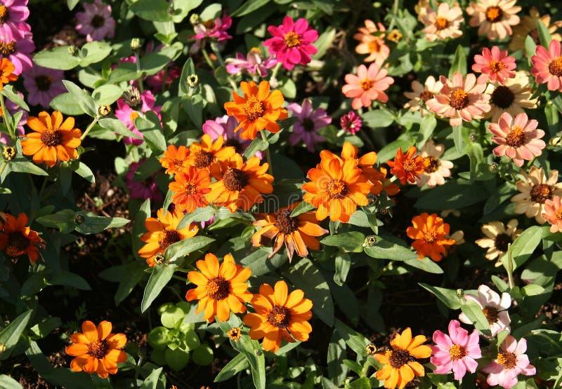 Prato inglese del fiore fotografia stock libera da diritti