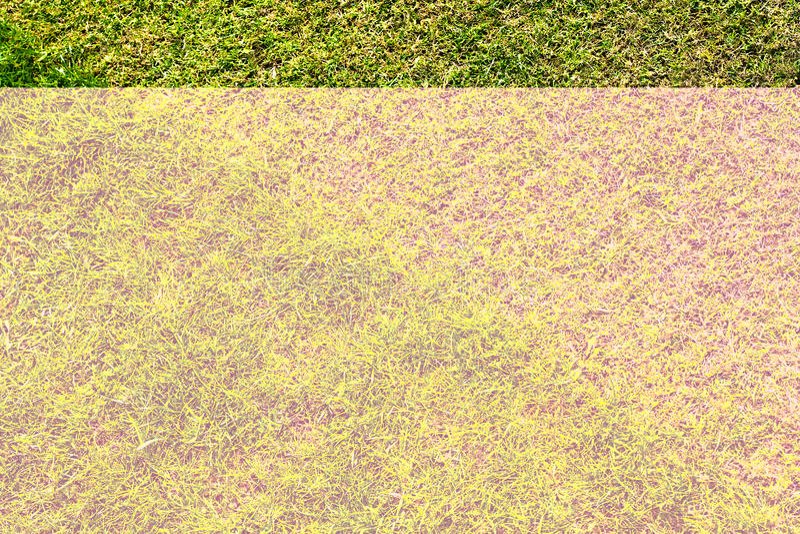Prato inglese dell erba