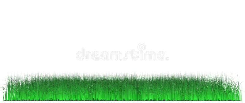 Prato inglese di erba sugosa fotografia stock