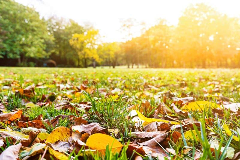 Prato inglese e fogliame di autunno il giorno soleggiato fotografia stock