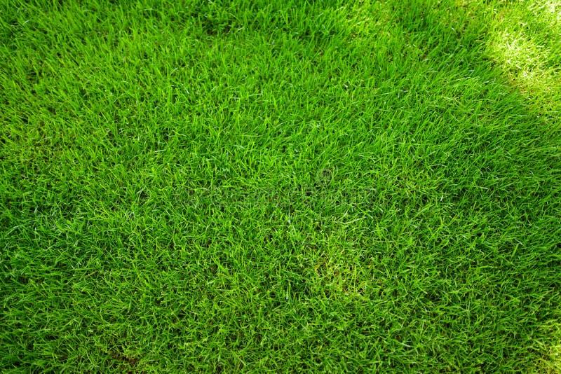 Prato inglese fresco perfettamente falciato del giardino di estate Erba verde con le macchie solari immagine stock