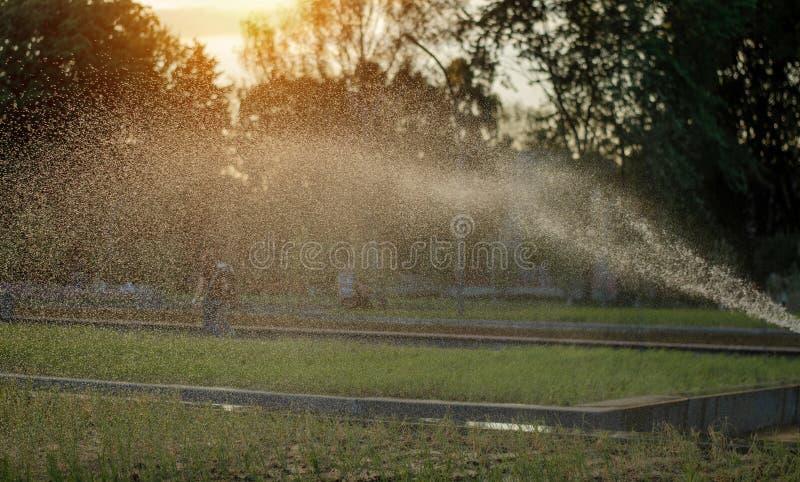 Prato inglese innaffiato Erba verde fresca Foto di estate fotografie stock libere da diritti