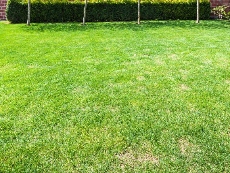 Prato inglese tagliato con la barriera verde sul cortile immagine stock libera da diritti