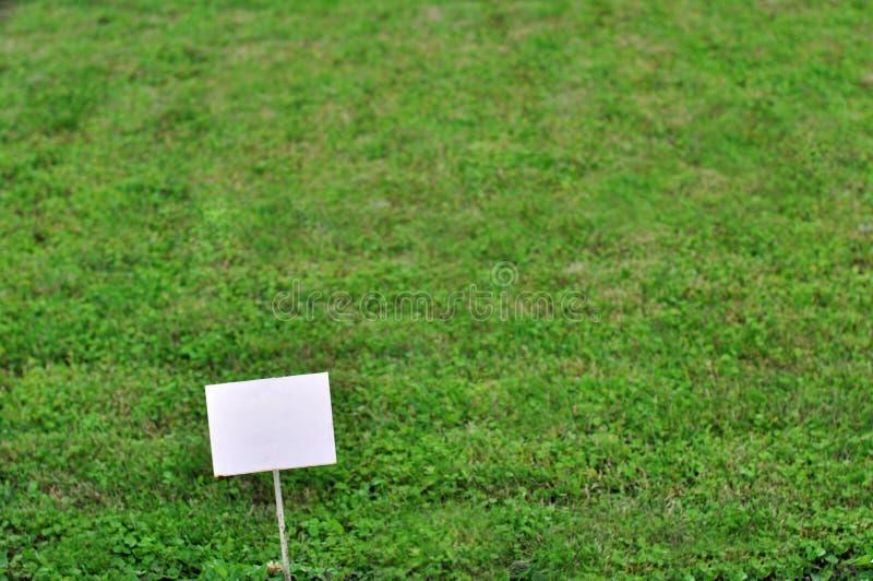 Prato inglese verde immagine stock libera da diritti