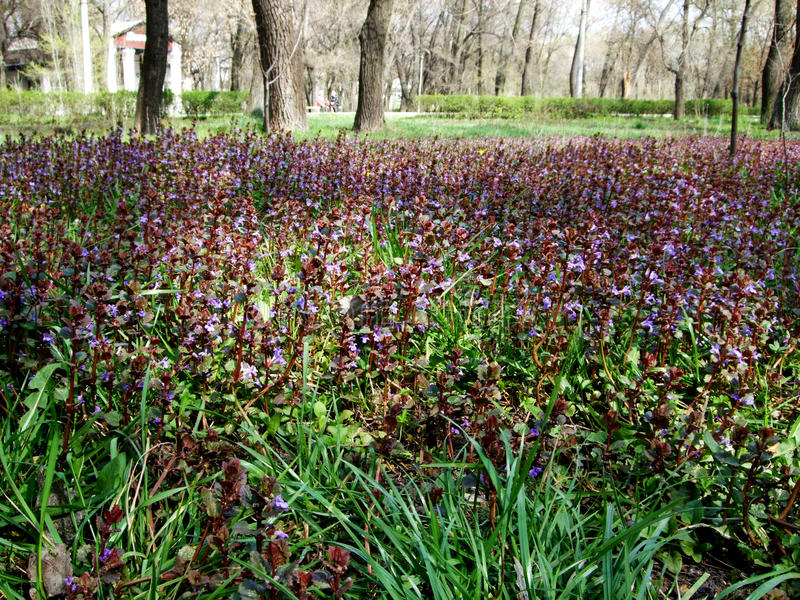 Prato inglese verde con i fiori selvaggi e l'erba fotografia stock libera da diritti