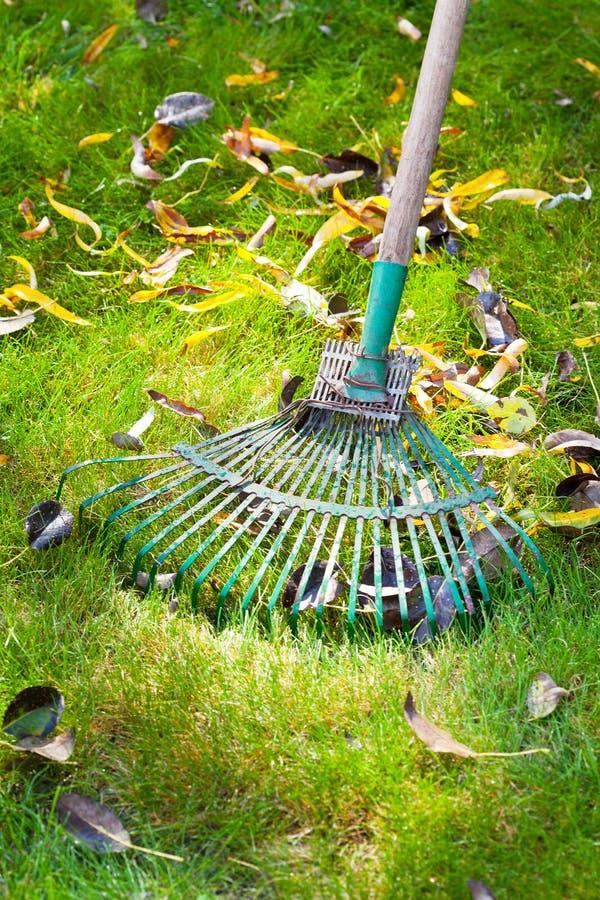 Prato inglese verde di pulizia dalle foglie morte fotografie stock libere da diritti