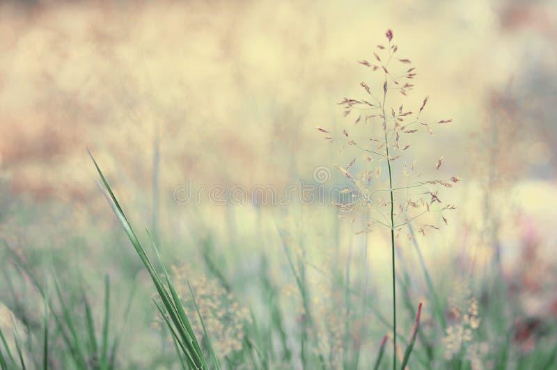 Prato lungo dell'erba immagini stock libere da diritti