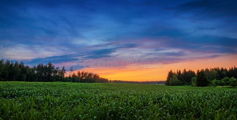 Prato in mezzo alle foreste sotto il cielo variopinto di sera fotografia stock