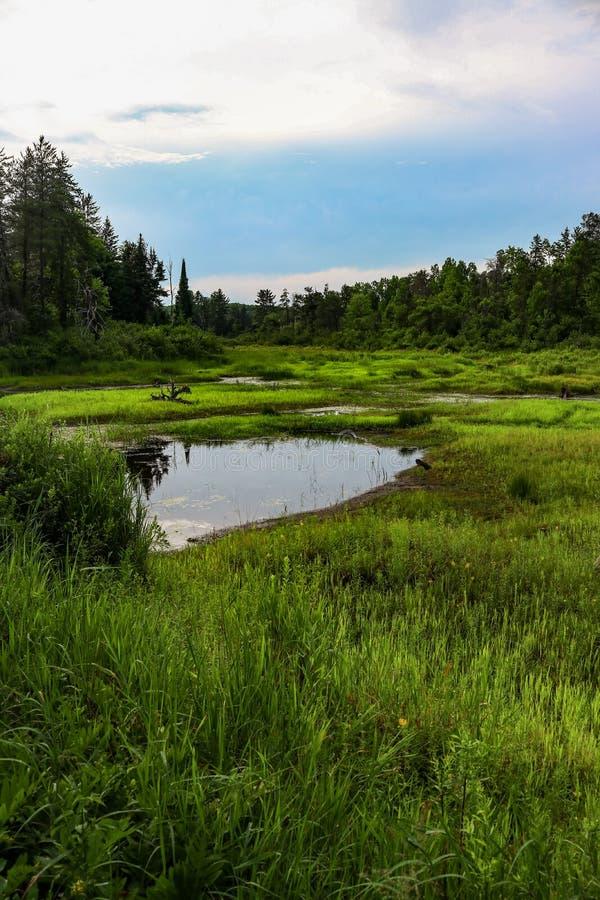Prato molto verde intorno al fiume inaridito immagine stock