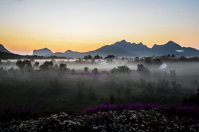 Prato nebbioso un primo mattino immagini stock