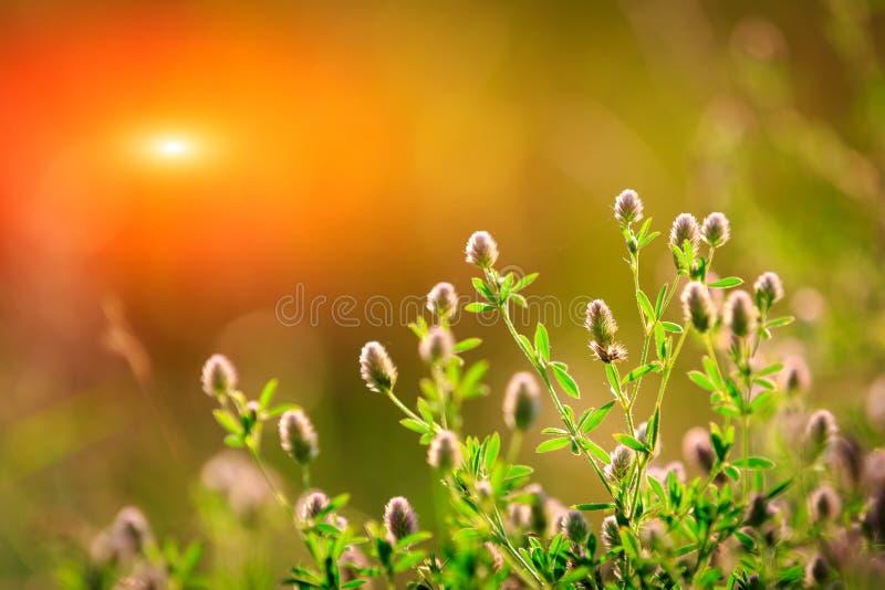 Prato piacevole del fiore di estate immagine stock libera da diritti