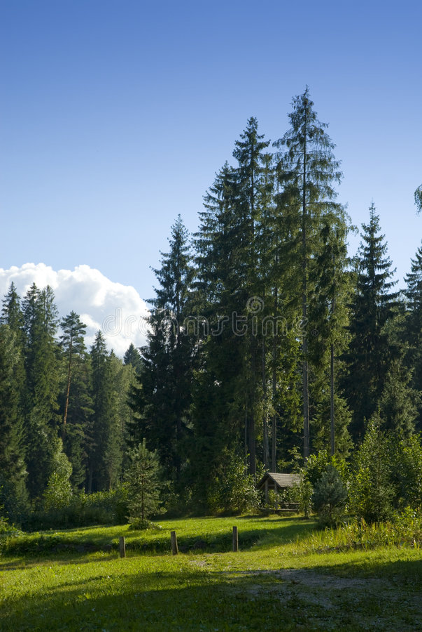 Prato scenico della foresta fotografia stock libera da diritti