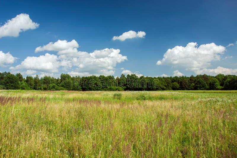 Prato selvaggio con le erbe, la foresta e le nuvole bianche su cielo blu immagine stock