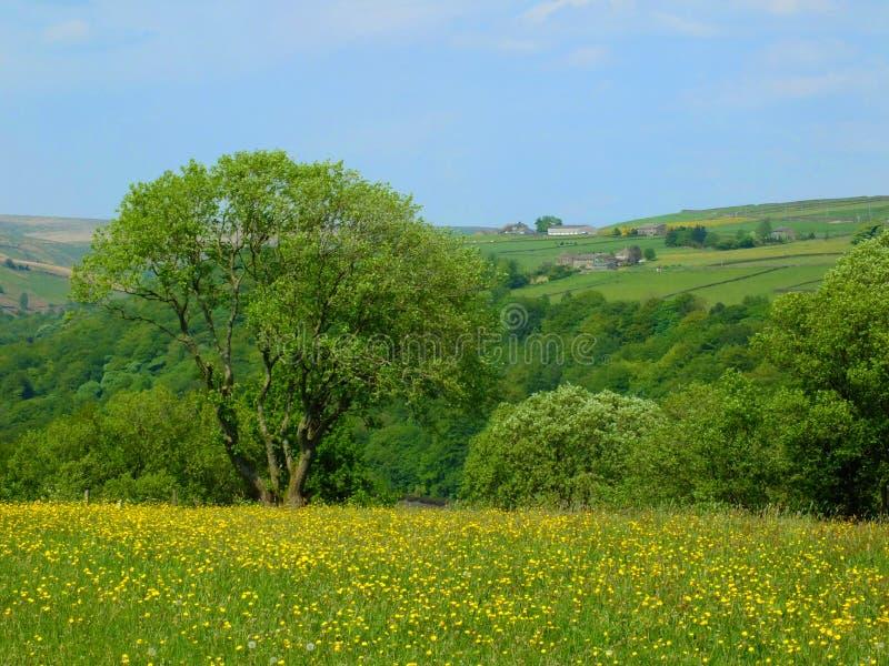 Prato vibrante della molla con i fiori gialli e gli alberi circostanti con il terreno coltivabile del pendio di collina e campi n immagine stock