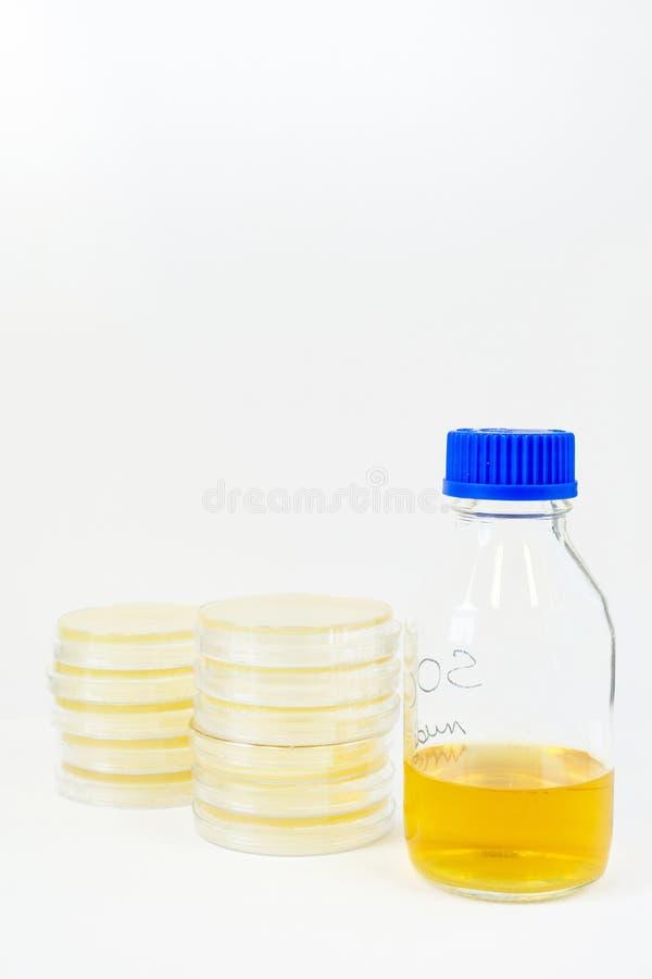 Pratos de Petri com meios do crescimento imagens de stock royalty free