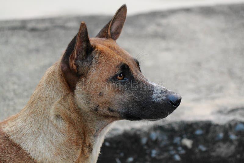 Prawa strona widoku pies zdjęcie royalty free