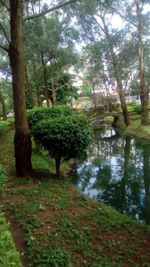 Prawdziwy greenery Cameroon w Africa zdjęcia stock