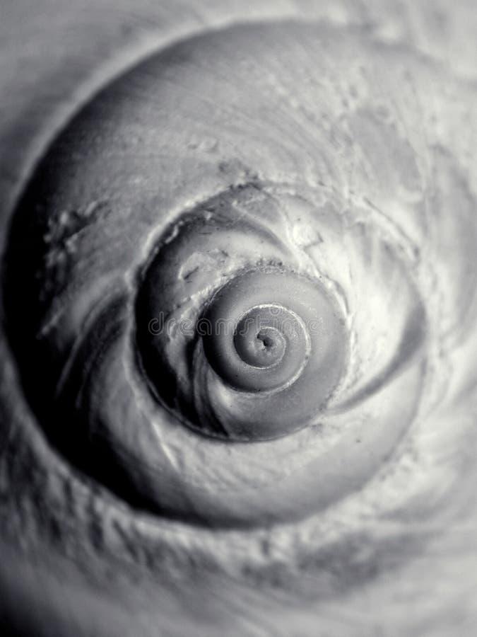 prawdziwy seashell bw wzór ślimak obraz stock