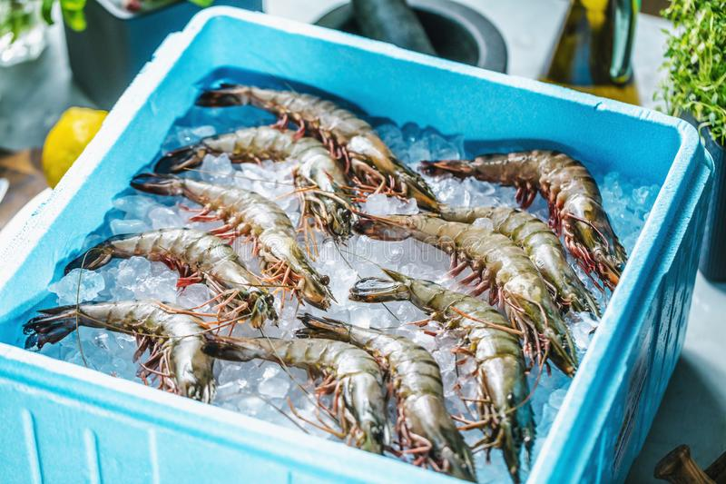 Prawn newly fished and stored in boxes with ice. Prawn newly fished and stored in blue box with ice stock photo