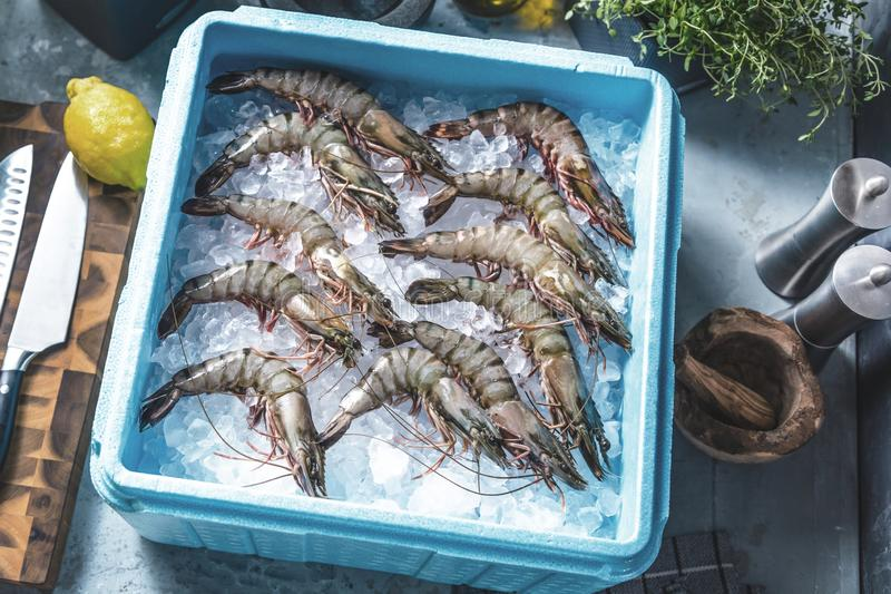 Prawn newly fished and stored in boxes with ice. Prawn newly fished and stored in blue box with ice stock photos